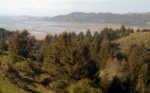 Humboldt Bay Viewed from Table Bluff Clounty Park